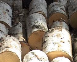 Как купить лесоматериалы. Советы - Березовый лес