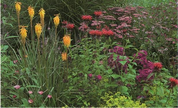 Основные принципы благоустройства сада - Эмоциональное воздействие цвета