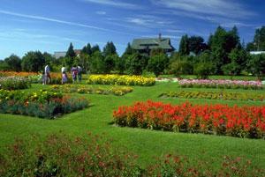 Газоны. Разновидность газонов - Декоративный газон