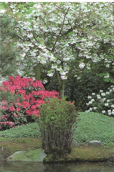 Сравнительные характеристики различных типов садов - пример сада