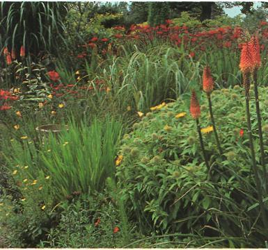 Сравнительные характеристики различных типов садов - многолетники