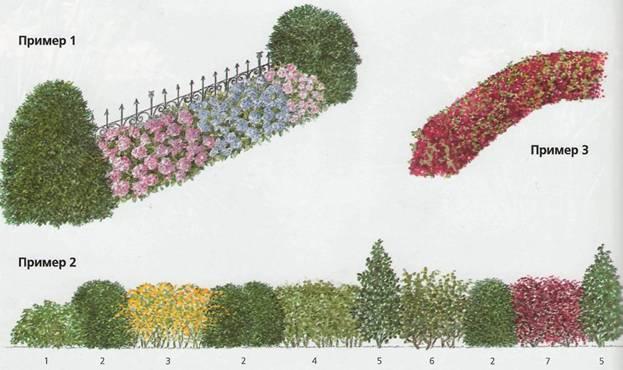 Оформление изгороди и входа - Оформление живых изгородей в старых садах