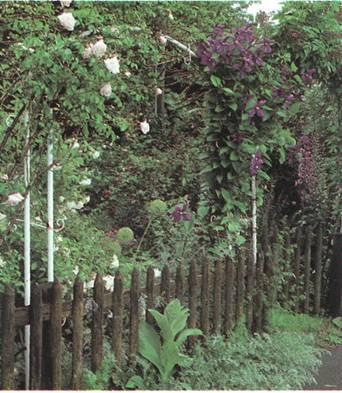 Оформление изгороди и входа - Новое оформление для входа, пергол и стенок