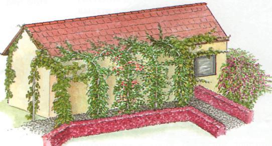 Оформление изгороди и входа - Затененные стены дома или перголы