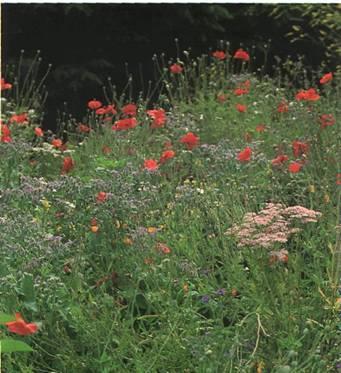 Вместо газона - ландшафтный сад - украшение сада