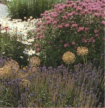 Новые клумбы - клумбовые растения