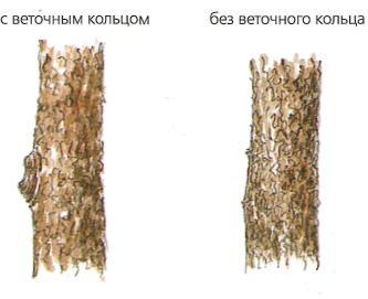 Обрезка и омоложение растений - пример обрезки дерева 2