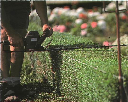 Омоложение растений в саду - Подрезка растений