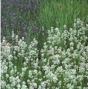Озеленение приусадебных участков - почвопокровные растения