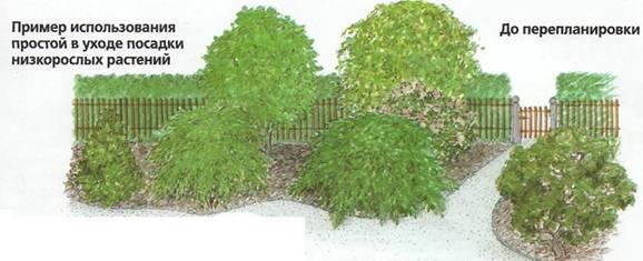 Озеленение приусадебных участков - перед перепланировки