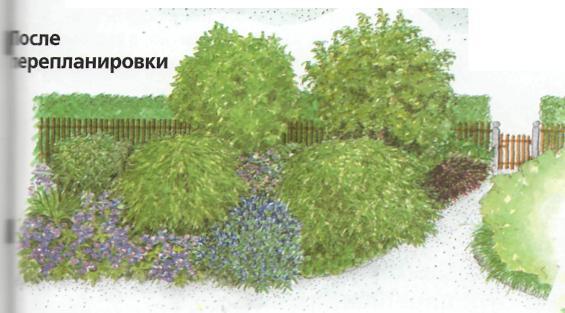 Озеленение приусадебных участков - после перепланировки
