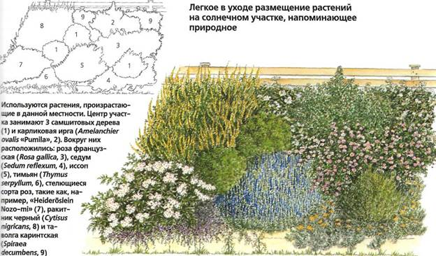 Как сделать уход за садом менее трудоемким - пример сада 3