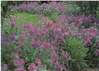 Как сделать уход за садом менее трудоемким