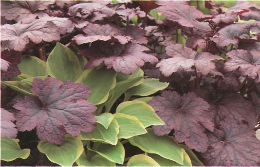 Яркие краски растений - цветы