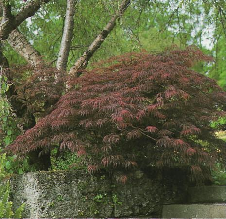 Яркие краски растений - пример кустарника