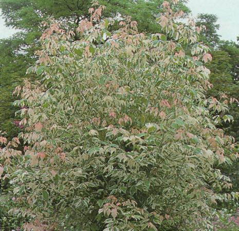 Яркие краски растений - пример кустарника 2